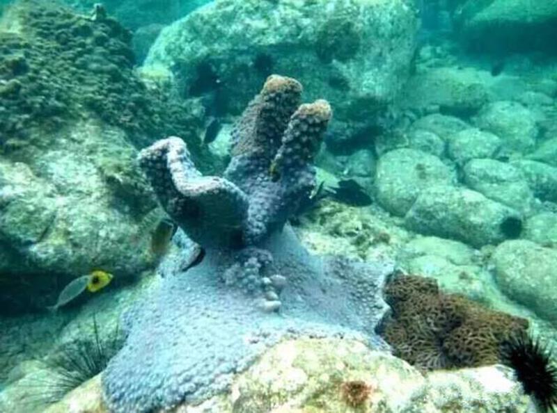 壁纸 海底 海底世界 海洋馆 水族馆 桌面 800_594