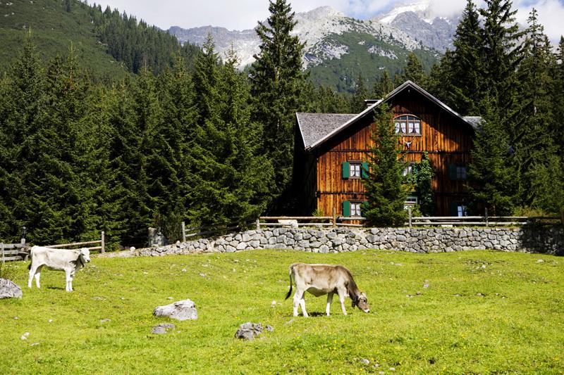 輕奢之旅】入住佛山美的鷺湖森林度假區家庭木屋別墅